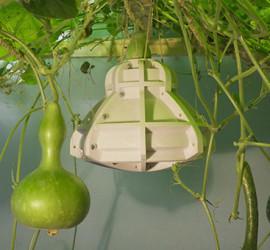 solar gourd